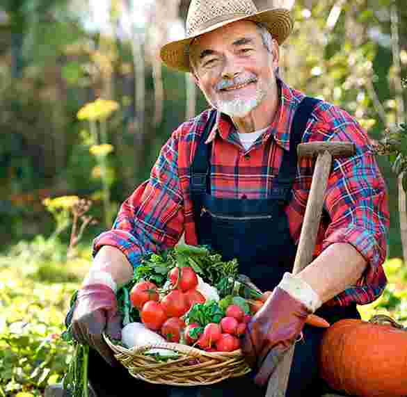 elder man holding tomatoes from garden