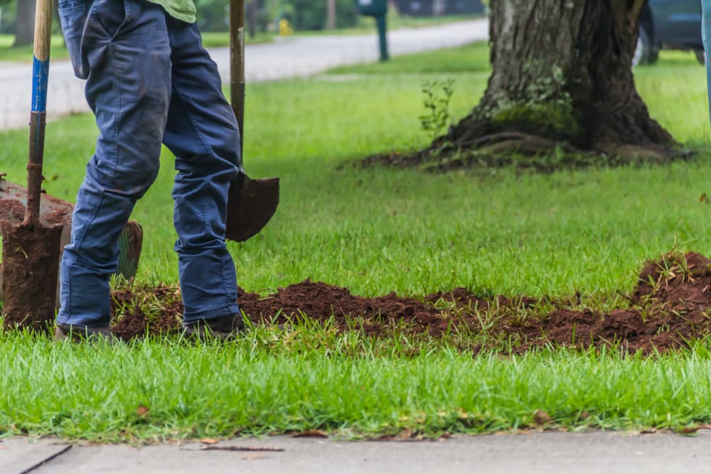 Hiring a Lawn Company vs. DIY Lawn Cutting