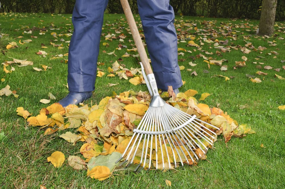 5-fall-tips-to-prepare-your-lawn-for-the-winter
