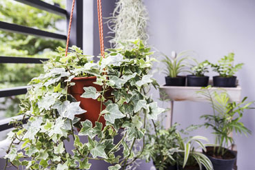 5-Ways-to-Use-Potted-Plants-During-the-Winter_370247